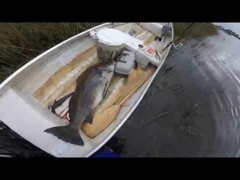 Cedar Key Monster Black Drum Fishing