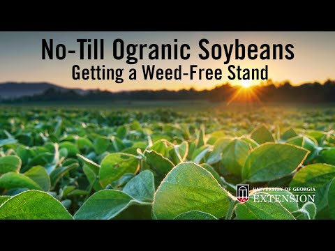 Success with No-Till Organic Soybeans: Getting That Good Weed-Free Stand