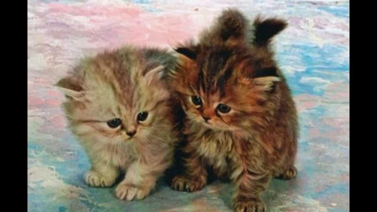 I gattini piu teneri del mondo youtube for Sfondi gatti gratis