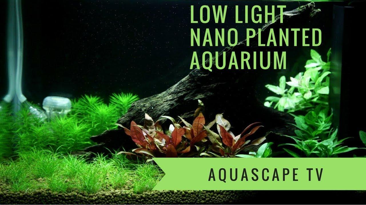 low light nano planted aquarium with led and co2 aquascape tv