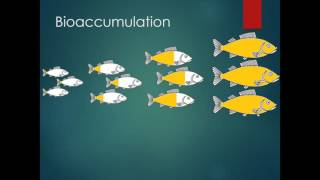 What's In the Fish? Bioaccumulation and Biomagnification