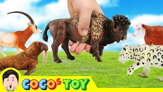 [EN] Let Animals go home 3!! animals names and sound for kids, animation, collectaㅣCoCosToy
