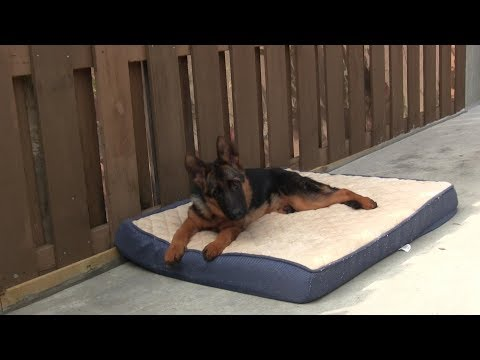 Teaching your dog the BED or PLACE command