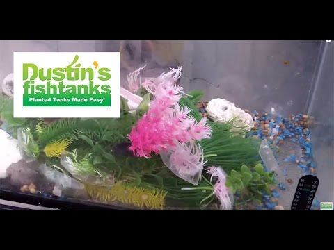 How I Started Getting into Fishtanks. Early Ages of Dustin's Aquariums