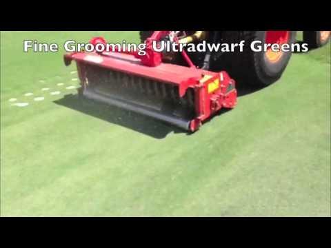 ED130-Fine Grooming Ultradwarf Greens