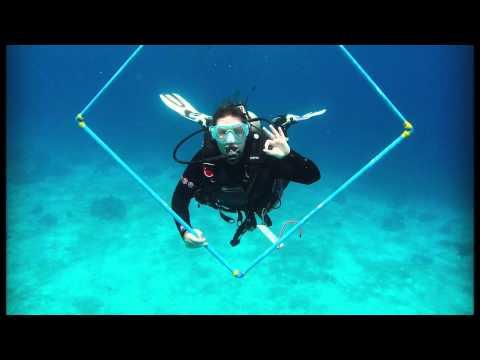 Global Nomadic   Marine Conservation Experience Programme