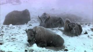 National Geographic Documentary HD   History Channel   Yellowstone National Park