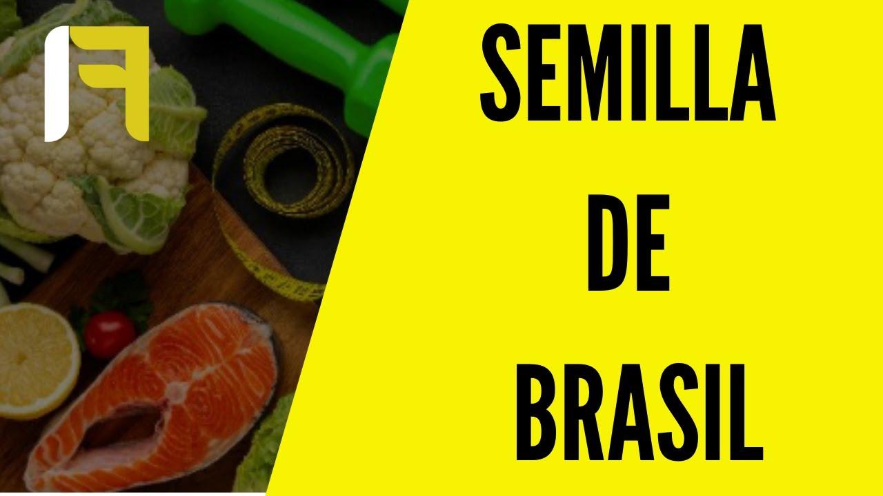 Bajar de peso con semilla de brasil youtube Semilla de brasil es toxica