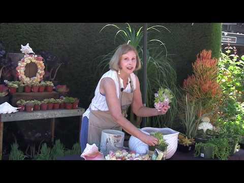 Succulents, Shells and Summer: Debra's Potting Demo at Roger's Gardens