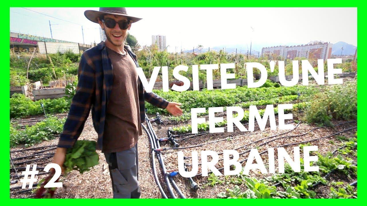 Planter Dans Un Talus farm tour : le talus À marseille