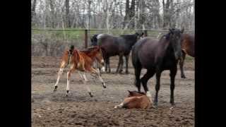 """""""Кони ждут своих принцев"""". Запорожский конный завод.  STomko"""