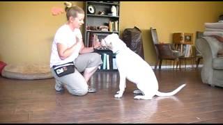 Deaf Dog Clicker Training - Marking The Behavior Tutorial