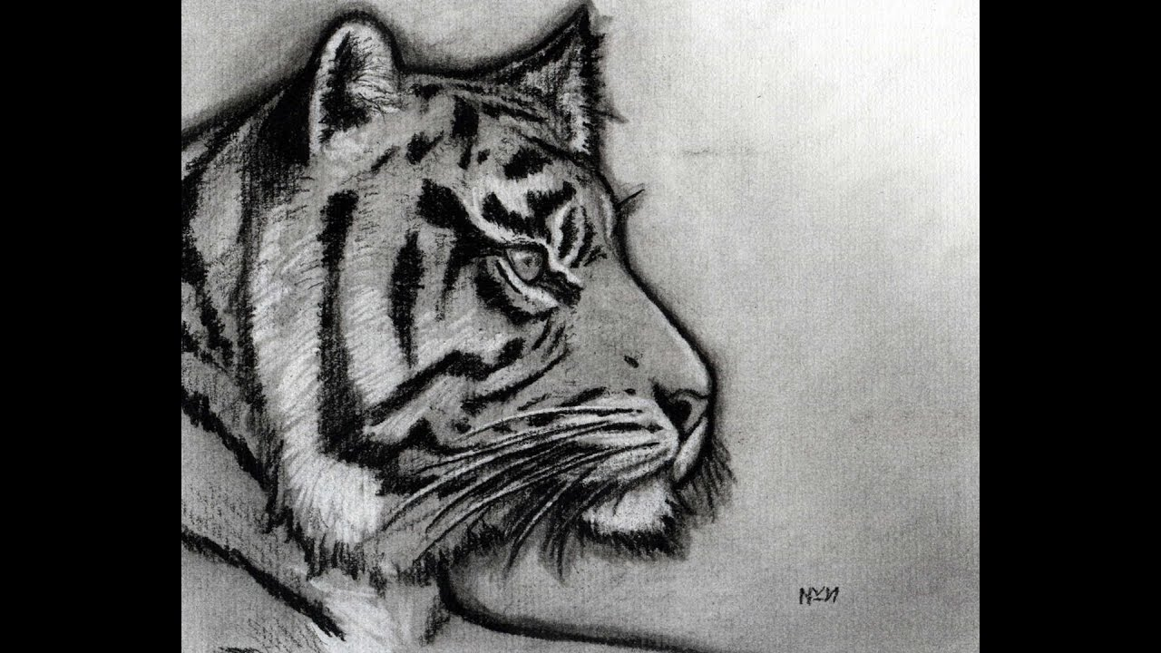 Line Drawing Of A Tiger S Face : How to sketch a tiger youtube