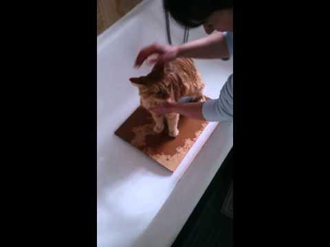 Come fare il bagno al gatto cat wash cat bath red cat lavare il gatto youtube - Fare il bagno al gatto ...