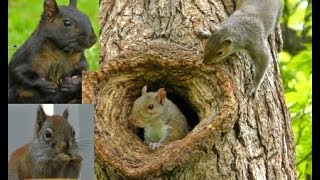 BEAUTIFUL Videos For Cats and Dogs To Watch ! (3 HOURS) Squirrels,Bunnies,Pigeons, Birds,