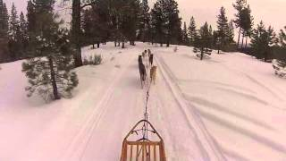 Seawolf (tahoe) Sled Dogs - Training Run Part 1, Outbound