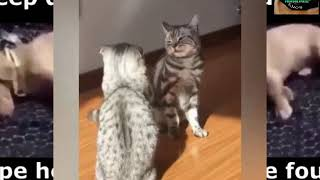 funny animal/Try Not To Laugh Watching Funny Animals Compilation | Funniest Animals  2019