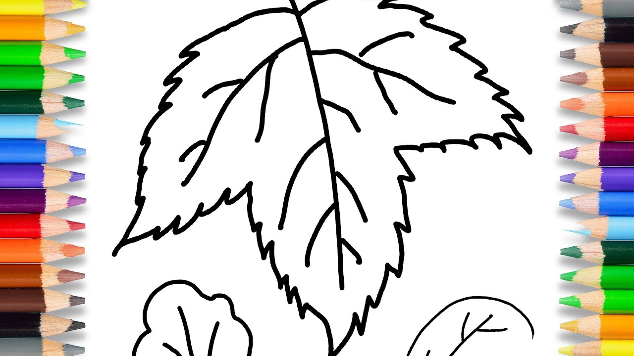 Learn Drawing Leaves For Kids, How To Draw Simple Leaves