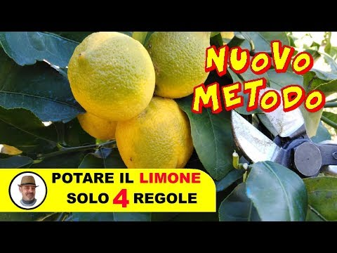 POTARE IL LIMONE SOLO 4 REGOLE