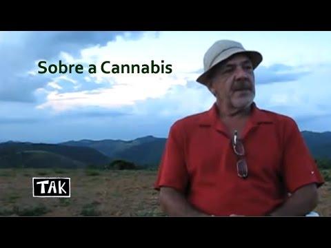 Tak - Cannabis Sativa