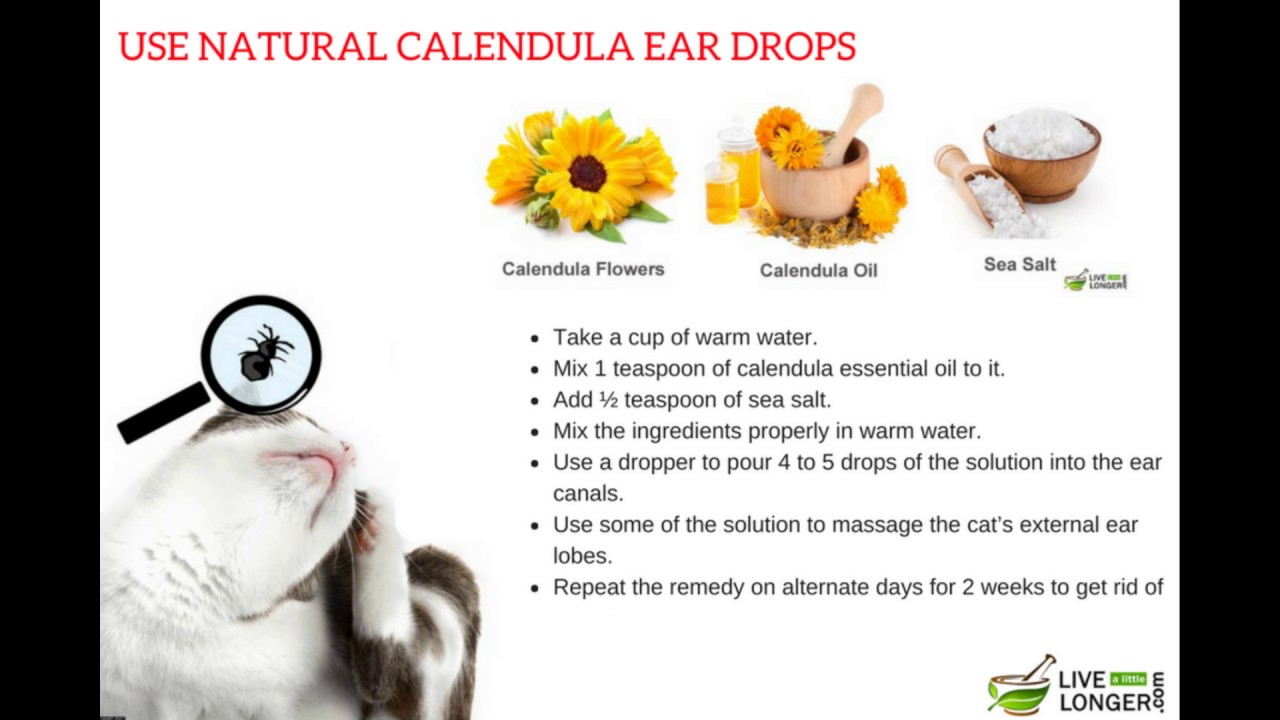 Proven Home Remedies For Ear Mites In Cats Youtube