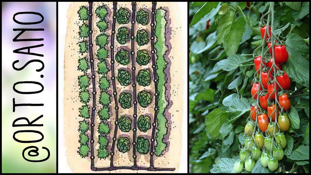 Come piantare i pomodori con l 39 impianto a goccia for Piantare pomodori