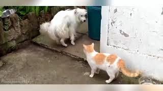 Самое смешное видео про собак и кошек 2016 HD