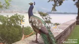 Pachamalai poovu. Karoke song by sargunam