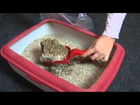 Kako ocistiti, koliko cesto i koje posipe koristiti za toalet za mace?