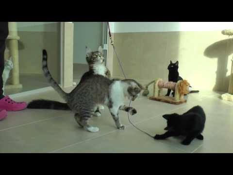 Baby cats in the Cat Hotel Luxembourg