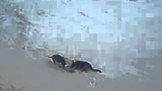 собачья драка(у псов тоже есть свои игрушки:), 2012-01-30T10:51:53.000Z)