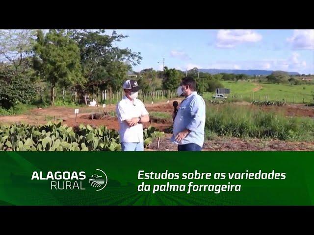 Estudos sobre as variedades da palma forrageira