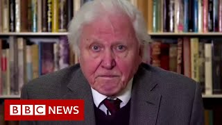 Attenborough gives stark warning on climate change to UN - BBC News