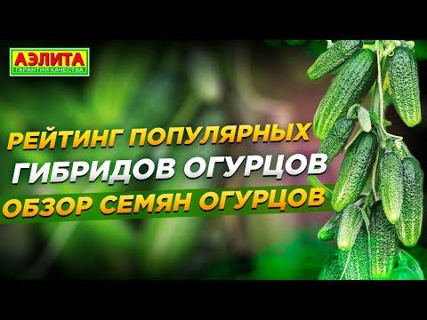 Вопрос: Где купить старинные русские семена огурцов и томатов, не гибриды?
