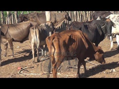 Sequía en Dajabón provoca pérdidas millonarias en el sector agropecuario