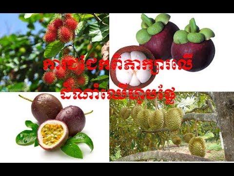 Cambodia Agriculture - ការជជែកពិភាក្សារលើដំណាំហូបផ្លែ