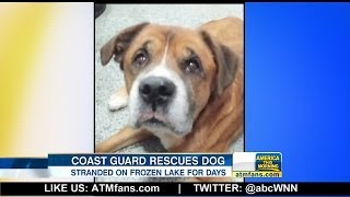 Dog Rescued From Frozen Michigan Lake