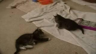 HAUL: Kittens!!!! Thumbnail