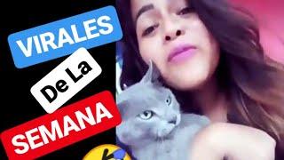 VIDEO VIRALES de Facebook y Tiktok - virales de la semana