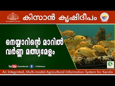 Ornamental fish rearing at neyyardam by department of for Ornamental fish