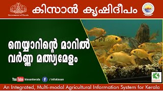 Ornamental Fish rearing at Neyyardam by Department of Fishes, Govt. of Kerala Episode- 636
