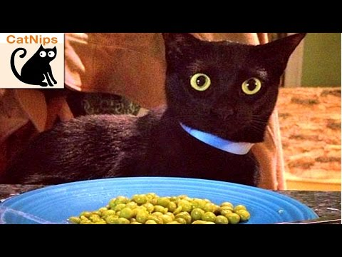 Pet Owner Pranks Their Cat With Musical Peas | CatNips