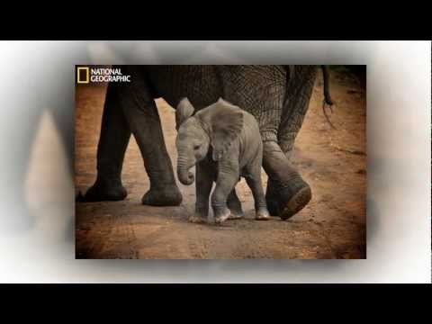 National Geographic 2012 music by Schiller-Morgenrot