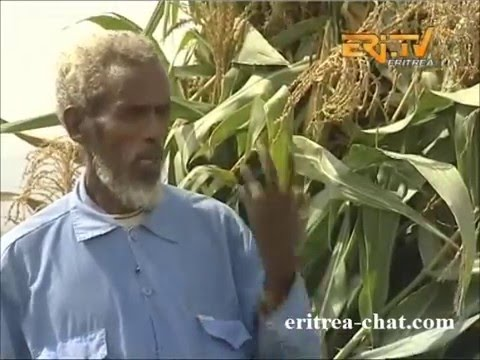 Eritrean Tigre Documentation - Herar - Agriculture - Eritrea TV