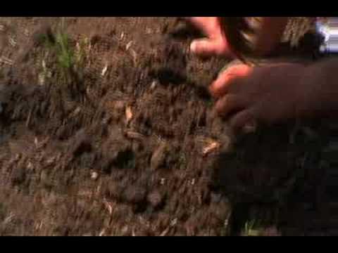 Gardening as Cultural Renewal - the Gila Crossing School Program