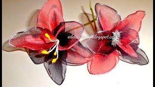 Como hacer orquídeas exóticas y pequeñas