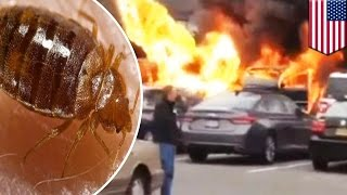 Bed Bugs Fireball: Car Destroyed After Dumb Driver Cleans With Ethanol, Lights Cigarette