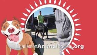 Visit Charleston Animal Society & Be Amazed!