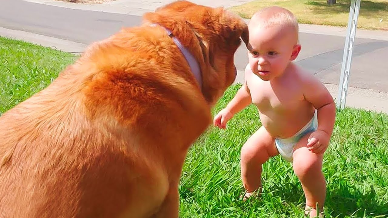Cute Baby Playing With Dog Compilation - Baby and Pets Video