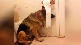 This is why GERMAN SHEPHERDS are the FUNNIEST DOGS 🐶 Funny DOG compilation